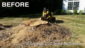 stump-before-web